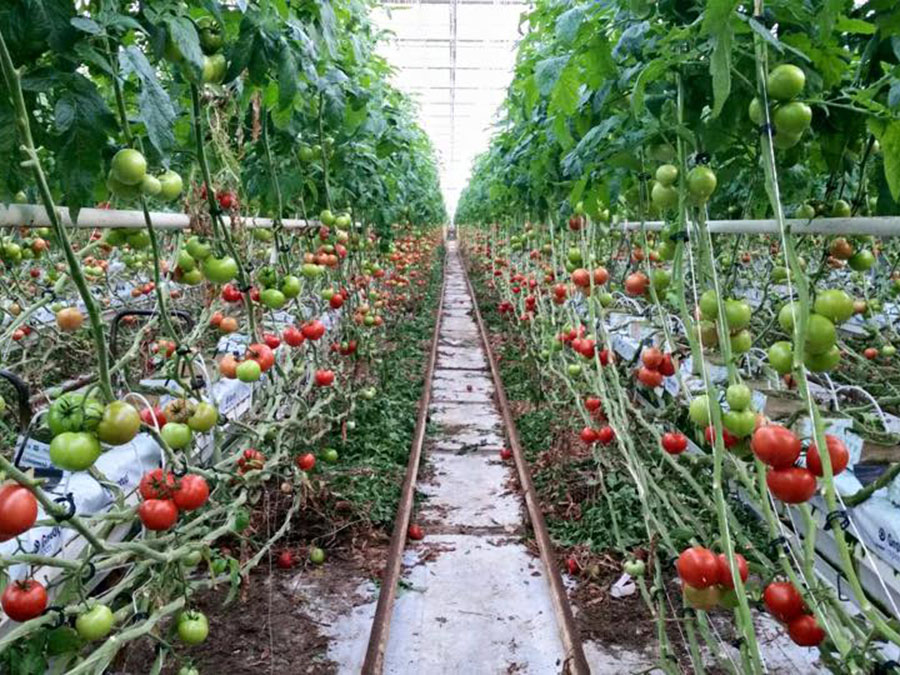 Agricultură high-tech cu sprijinul Olandei